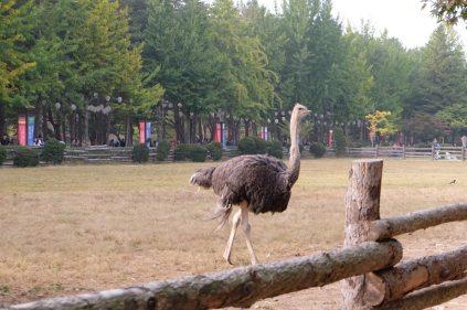 Ostrich!!!